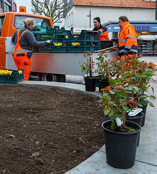 Die Bauhofmitarbeiter sorgen für frisches Grün in den Planzbeeten der Innenstadt. foto:kasse