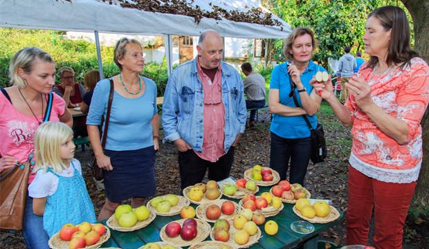 Ökostation sucht alte Apfelsorten