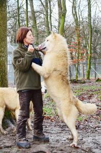 Wolf-November3