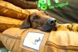 Neues Messe-Highlight für Hundebesitzer und Züchter
