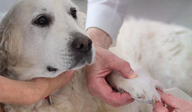 Zusatzkurs: Erste Hilfe am Hund