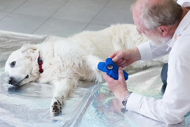 Fit für den Notfall: Der ASB bietet jetzt einen Kurs Erste Hilfe am Hund an.