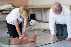 Ein neues Angebot des ASB: Kurs Erste Hilfe am Hund