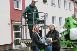 Gebäudebrüter sind auf künstliche Nistkästen angewiesen