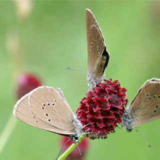 Schutz für Schmetterlinge