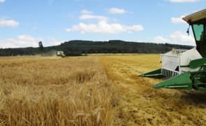 Getreideernte: Start frei für die Mähdrescher