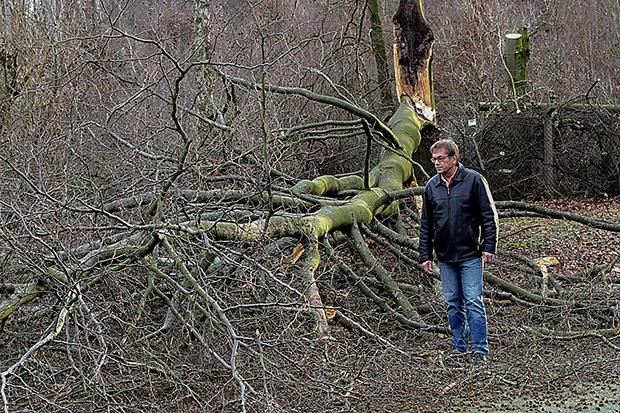 """Windbruch: Im Jahr 2012 begutachtete """"Gollo"""" Gottlob den Schaden auf dem Kunstrasenplatz, den ein gebrochener Baum – außerhalb des TSV-Geländes stehend – angestellt hatte."""