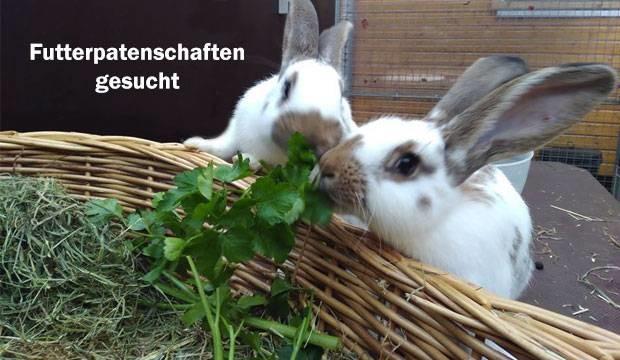 Tierschutzverein Barsinghausen sucht Futterpatenschaften