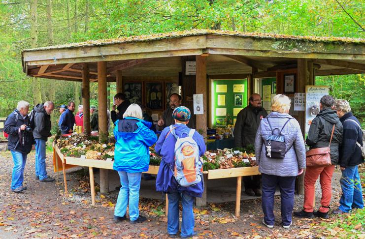 Die Pilzgruppe des Fördervereins Freunde des Wisentgeheges präsentiert eine Pilzausstellung beim Hubertusfest.