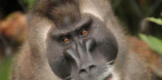 Der Erlebniszoo Hannover beherbergt viele bedrohte Tierarten. Christoph Loskant, stellvertretender Aufsichtsratsvorsitzender des Zoos, hat angeregt, über eine Schutzzone zu Silvester nachzudenken. Foto: Erlebniszoo Hannover