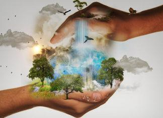 Freiwilliges Ökologisches Jahr